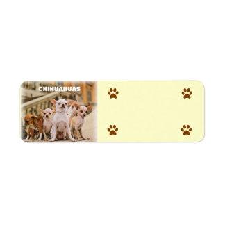La cuadrilla de la chihuahua etiqueta de remitente