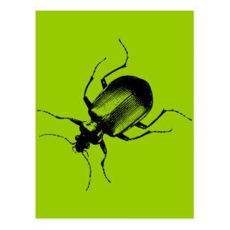 La Cucaracha Postcard
