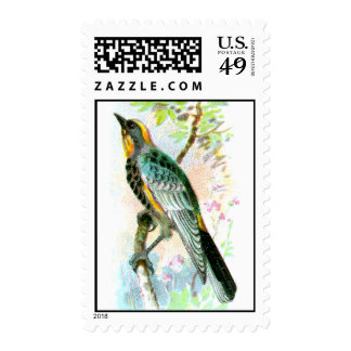 La curruca de Audubon Envio