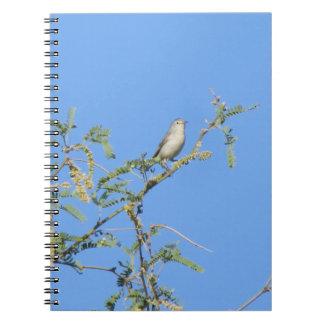 La curruca de Lucy en un árbol floreciente del Cuaderno