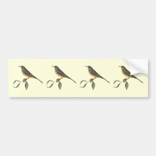 La curruca manchada de Canadá(pardalina de Sylvic Pegatina De Parachoque