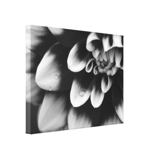 La dalia blanco y negro envolvió la impresión de l lienzo envuelto para galerías