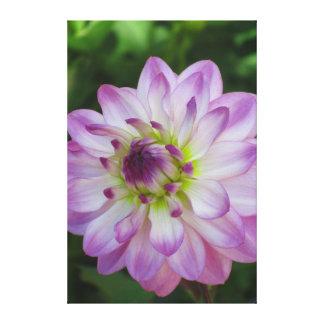 La Dalia - Púrpura y Rosa Canvas Print