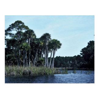 La de agua dulce de la reserva nacional del St. Vi Tarjeta Postal