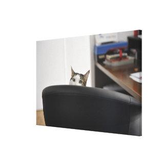 La demostración principal del gato de una silla de impresiones de lienzo