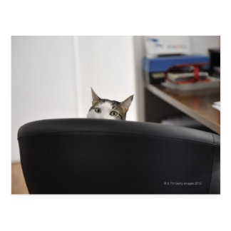 La demostración principal del gato de una silla de tarjetas postales