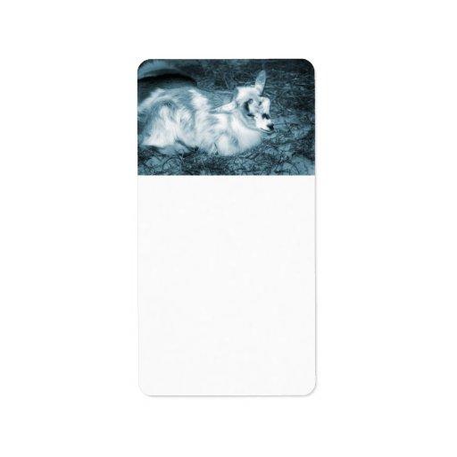 La derecha doeling del bebé de la pequeña cabra az etiqueta de dirección