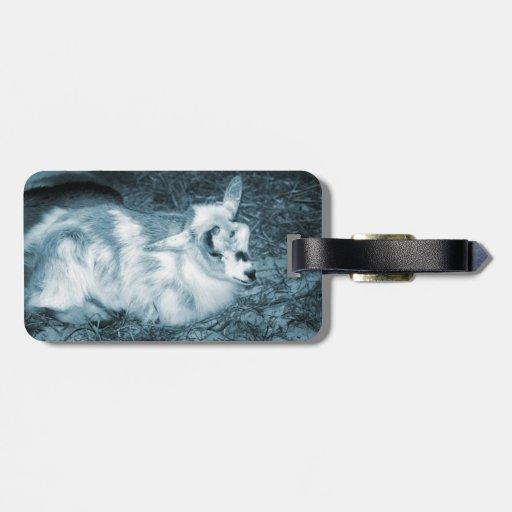 La derecha doeling del bebé de la pequeña cabra az etiquetas maletas