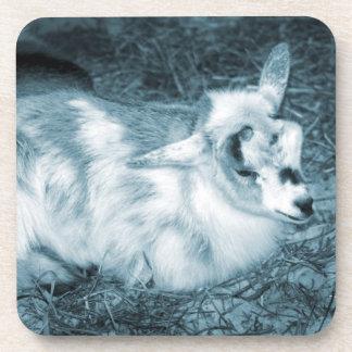 La derecha doeling del bebé de la pequeña cabra az posavaso