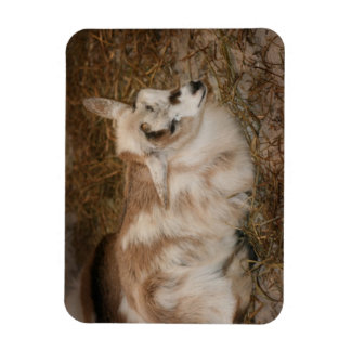 La derecha doeling del bebé de la pequeña cabra pe imanes flexibles