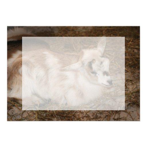 La derecha doeling del bebé de la pequeña cabra pe comunicado