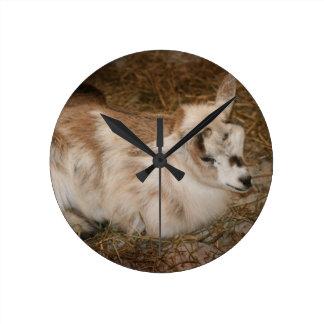 La derecha doeling del bebé de la pequeña cabra pe relojes de pared