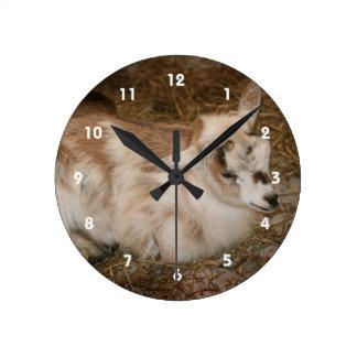 La derecha doeling del bebé de la pequeña cabra pe relojes