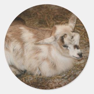 La derecha doeling del bebé de la pequeña cabra pegatina redonda