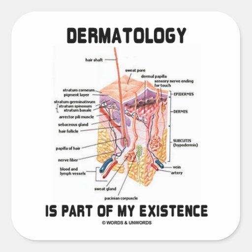 La dermatología es parte de mi existencia (las colcomanias cuadradases
