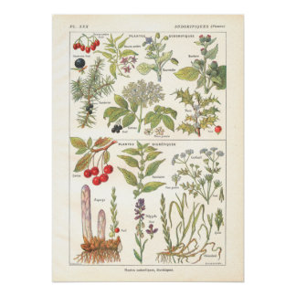 La diurética de las hierbas de las plantas medicin poster