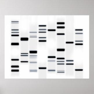 La DNA cifra negro del arte en blanco Póster