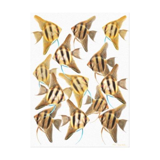 La escuela de los Angelfishes del acuario envolvió Impresión En Lienzo