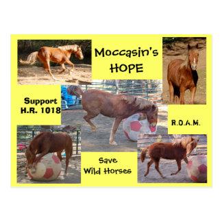 La ESPERANZA del mocasín - ahorre los caballos Postal