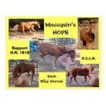La ESPERANZA del mocasín - ahorre los caballos sal Postal