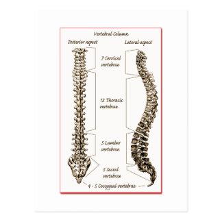 La espina dorsal detalla Sepia2 Tarjeta Postal