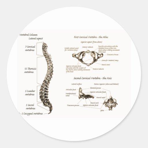 La espina dorsal detalla sepia pegatina redonda