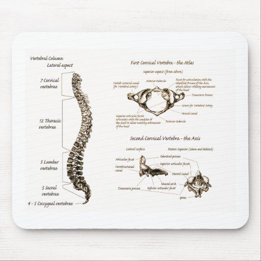 La espina dorsal detalla sepia tapete de raton