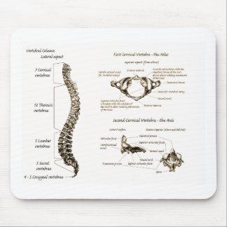 La espina dorsal detalla sepia tapetes de ratón