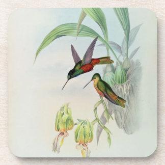 La estrella de Bonaparte afrontó el colibrí (color Posavasos De Bebida