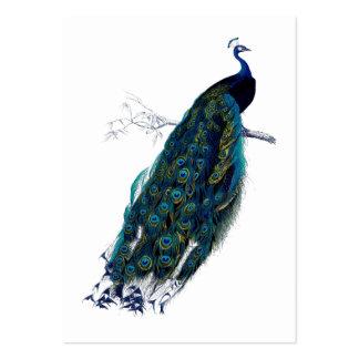 La etiqueta del regalo de la colección del pavo re tarjetas de visita