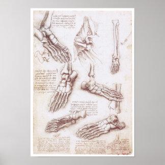 La extremidad más baja, Leonardo da Vinci Póster