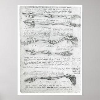 La extremidad superior, Leonardo da Vinci Impresiones