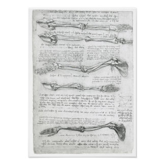 La extremidad superior, Leonardo da Vinci Póster