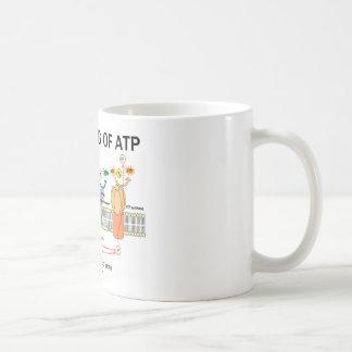La fabricación de ATP (fotosíntesis dependiente de Taza Clásica