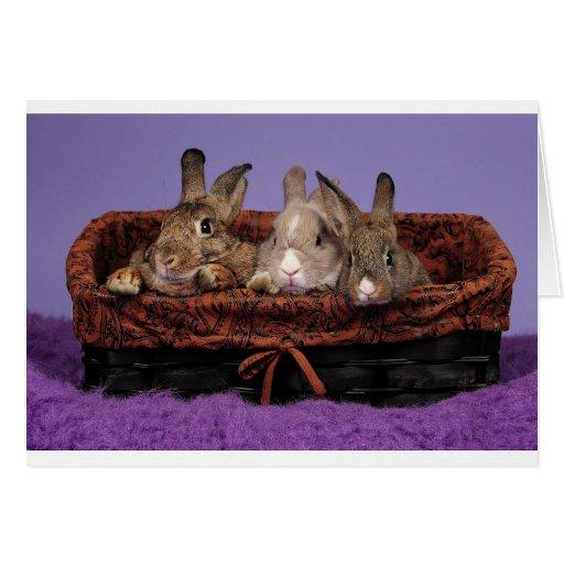La familia del conejito felicitación