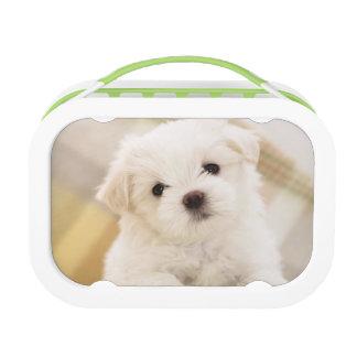 La fiambrera blanca linda del perro de perrito emb