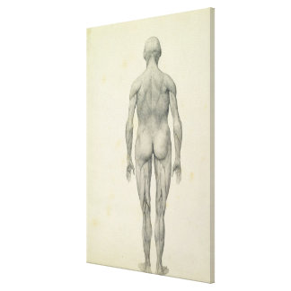 La figura humana, visión anterior, desde la serie  impresión en tela