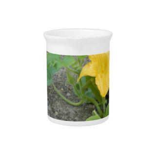 La flor amarilla crece en hormigón jarrones