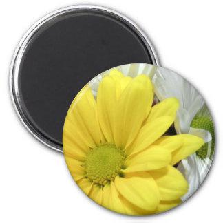 La flor amarilla de las margaritas de la margarita imán redondo 5 cm