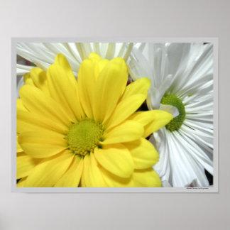 La flor amarilla de las margaritas de la margarita póster
