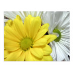 La flor amarilla de las margaritas de la margarita postal