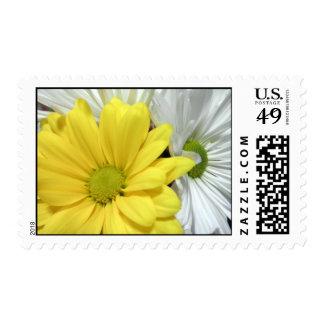La flor amarilla de las margaritas de la margarita timbres postales