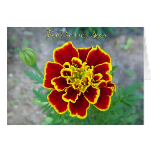 La flor anaranjada consigue la tarjeta bien