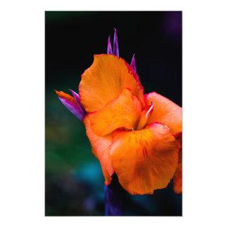 La flor anaranjada de la grúa cojinete