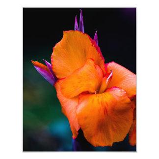La flor anaranjada de la grúa fotografía