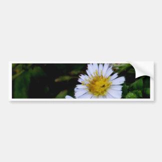 La flor blanca pegatina de parachoque