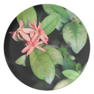 La flor coralina exótica tropical, Kew cultiva un Plato De Cena
