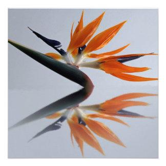 La flor de la ave del paraíso anuncio personalizado