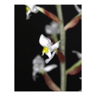 La flor de la orquídea Ludisia se decolora Membrete A Diseño