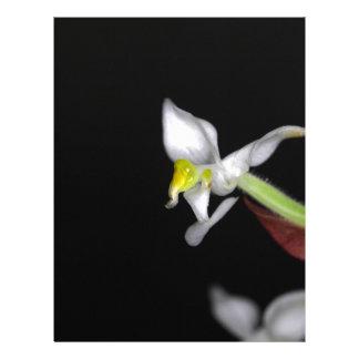 La flor de la orquídea Ludisia se decolora Membretes Personalizados